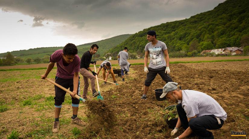 práca, rómovia, záhrada, pestovanie, burina