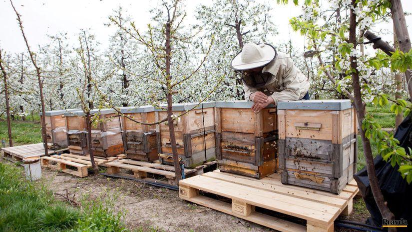 dunajska luzna, včely, včelárstvo, včelárenie
