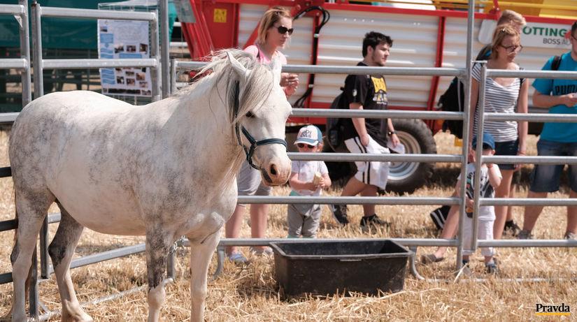celoslovenske dni pola, kôň, poľnohospodárstvo,...