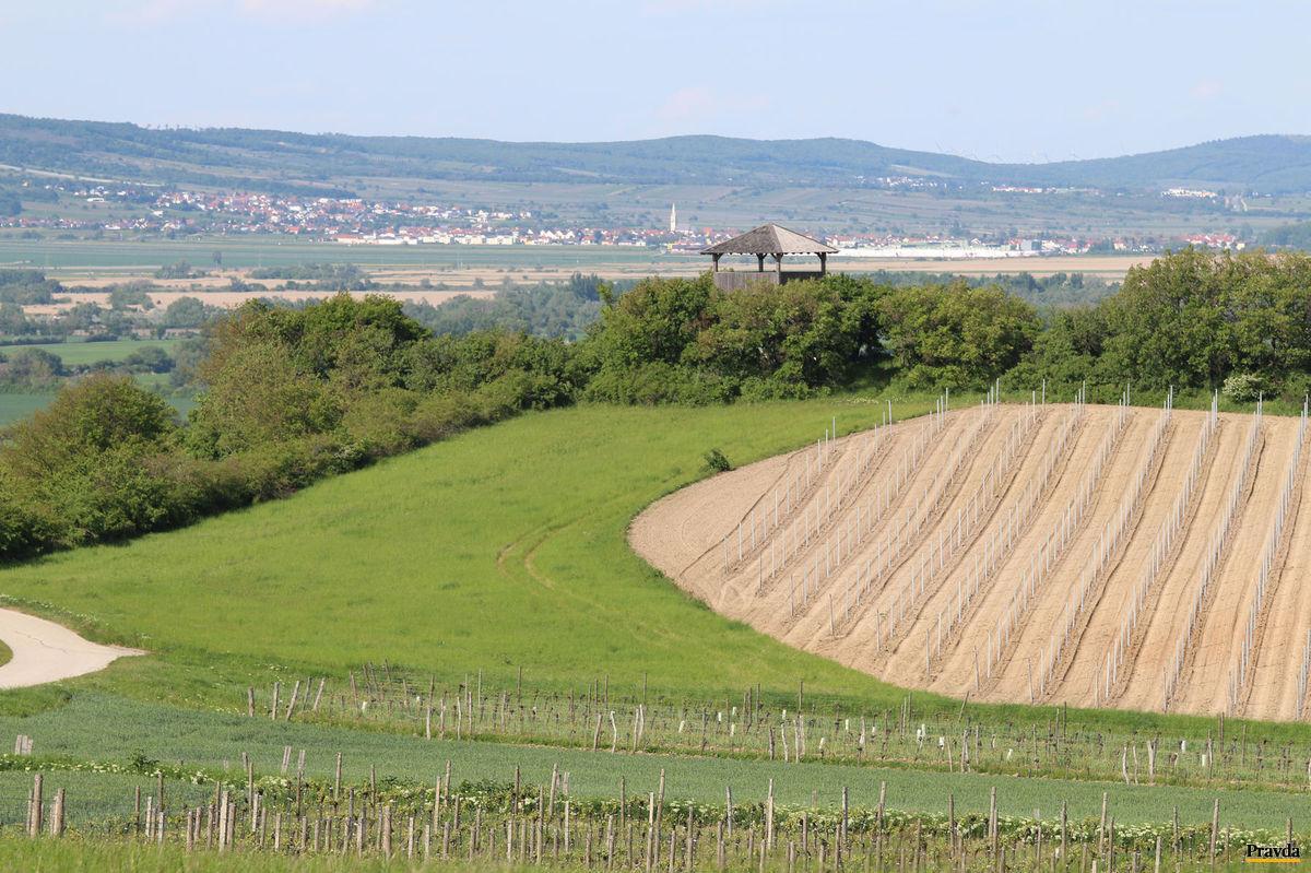 Z Královej vinice sa otvára krásny výhľad do burgenlandskej krajiny.
