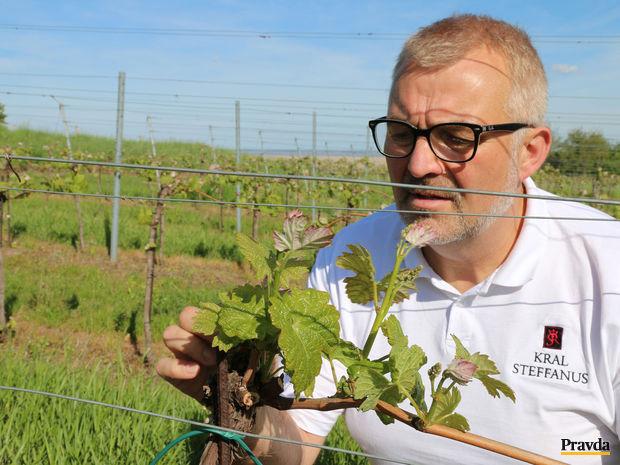 Obrázok Slovák dorába víno v rakúskom Ruste