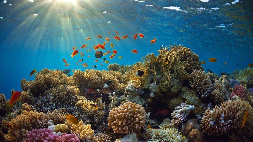 Globálne otepľovanie, koraly, riasy