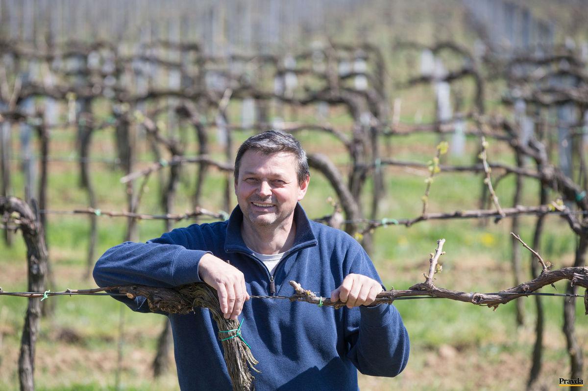 Ladislav Šebo: Vinica je moja láska.
