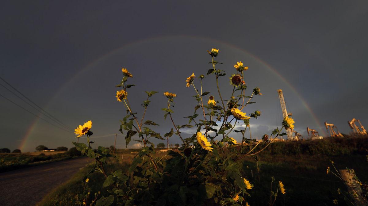 Texas, kvety, slnečnice, dúha, mraky, búrka