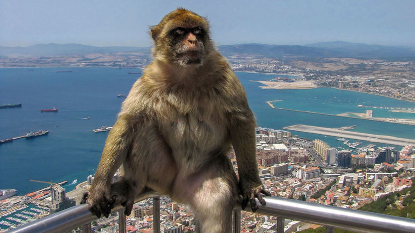 Gibraltár, opica