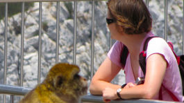 Gibraltár, opica, turistka
