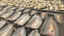 ostrov Phu Quoc, Vietnam, exotika, sušené ryby