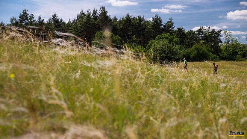 kavyľ, step, tráva, čenkovská step, duny