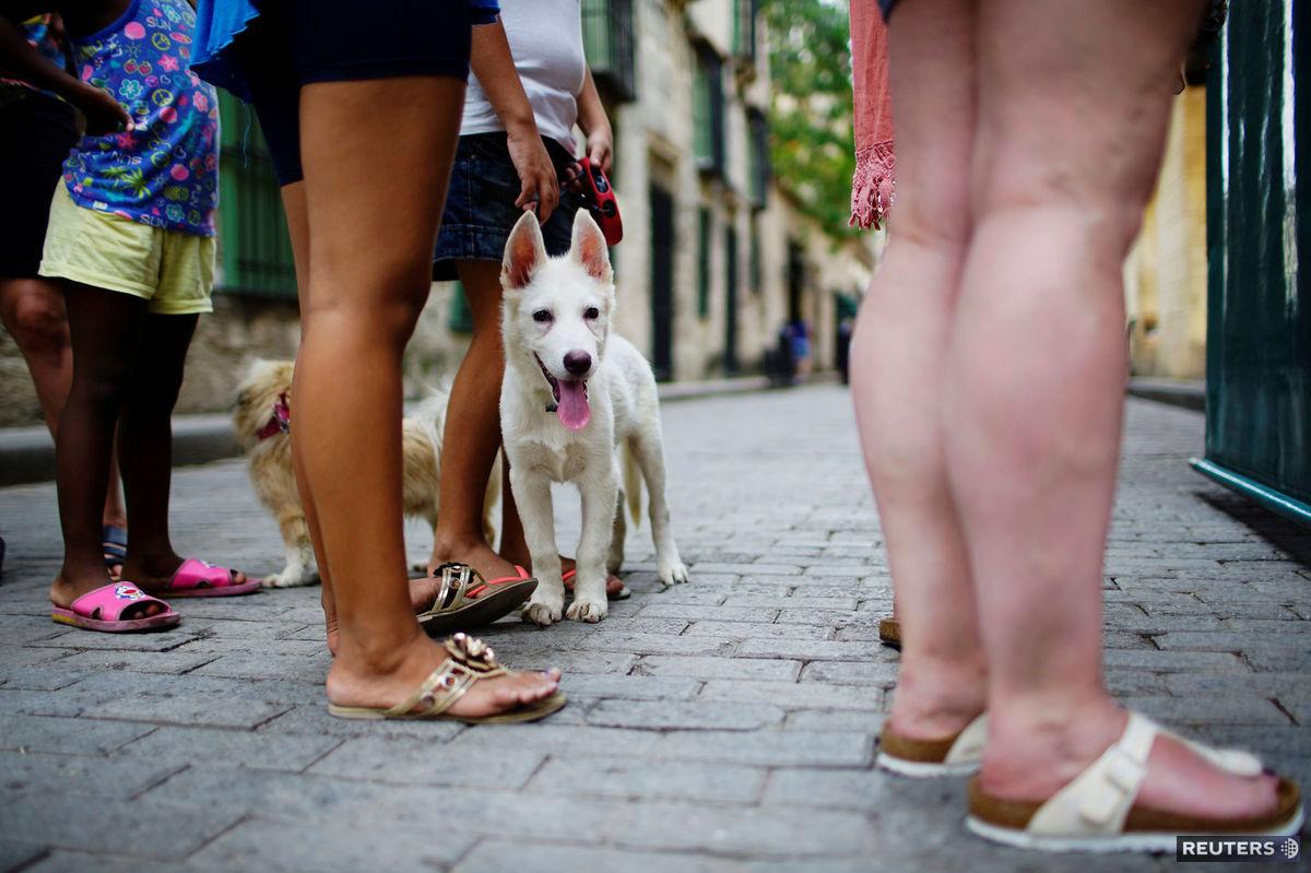 pes, nohy, ulica, zviera,
