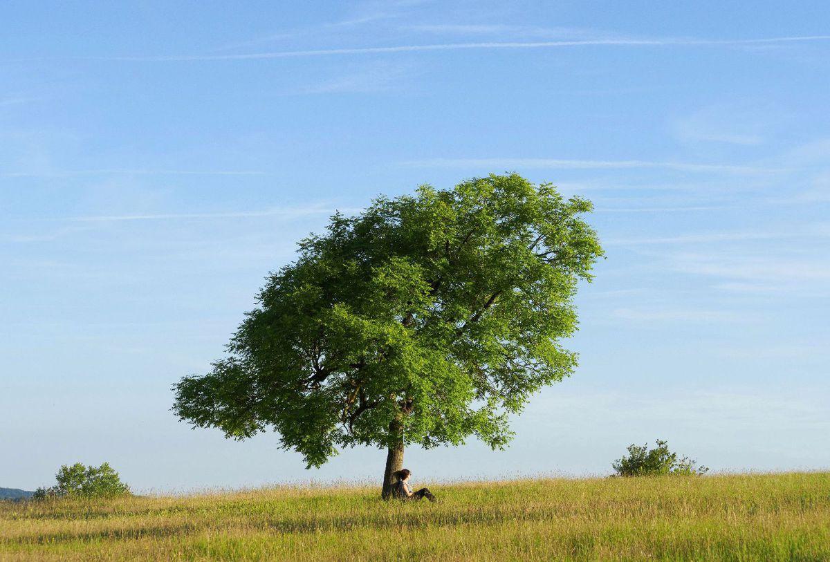 strom, leto, príroda, oddych, relax,