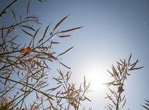 Ničivé sucho pustoší úrodu