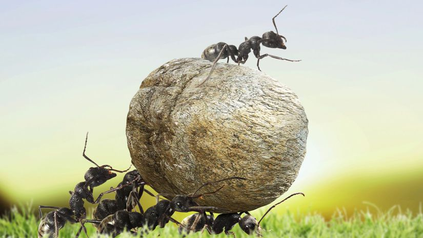 mravce, živočíchy