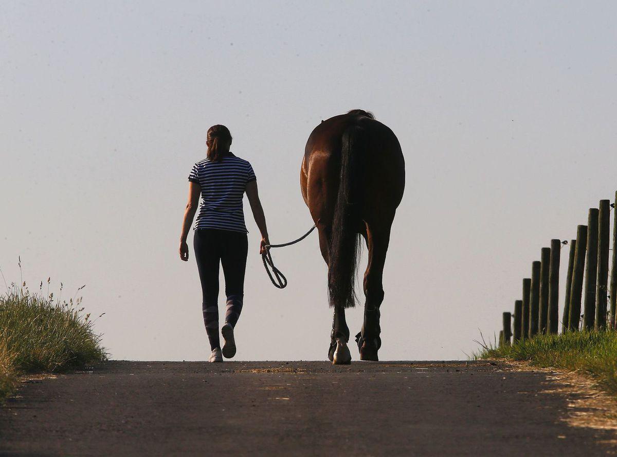 kôň, človek, zviera, jazdenie