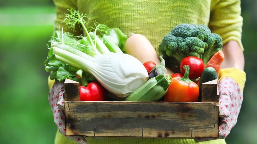 zelenina, šaláty