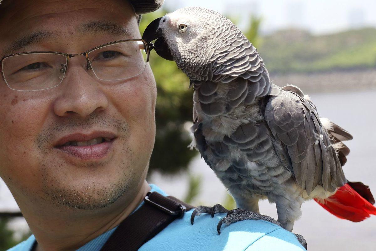 papagáj, vták,