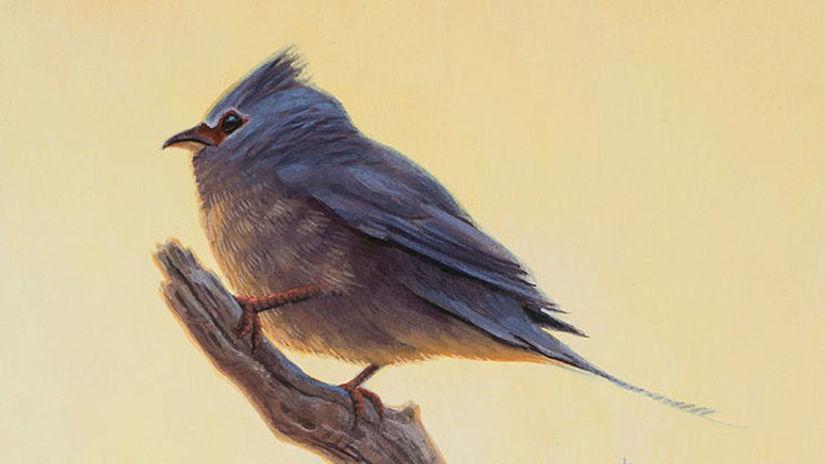 prehistorické vtáky Tsidiiyazhi abini