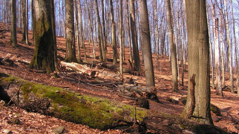 buky, les, karpaty,