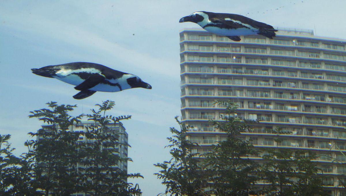 tučniaky, akvárium, Tokio