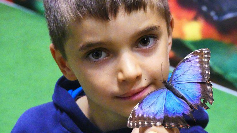 Motýlia záhrada, motýle