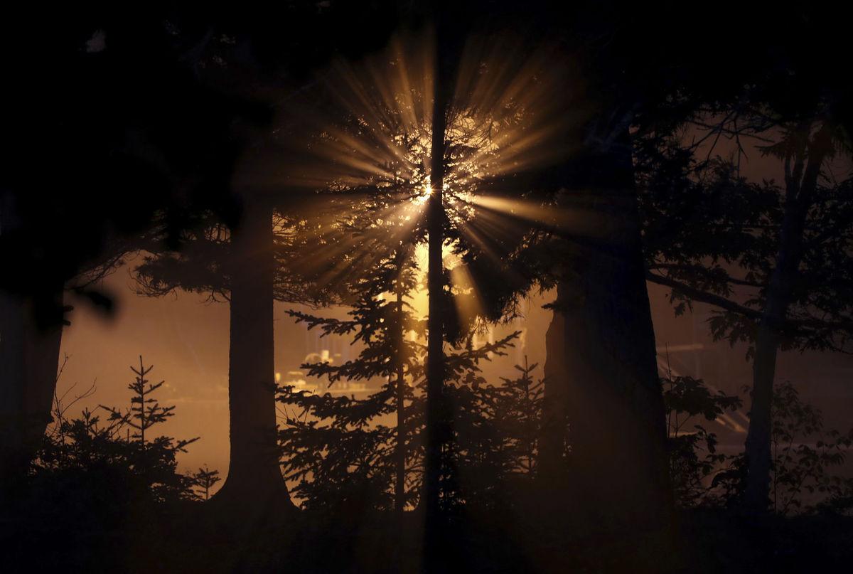 Maine, les, stromy, hora, svetlo, ráno, svitanie