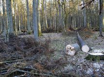 Bialowiežský prales, Poľsko