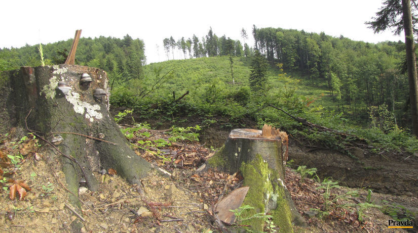 poloniny, stromy, pilenie, vyrub