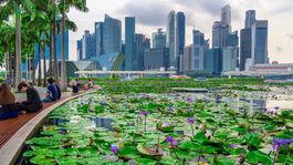 Singapur, mrakodrapy, mesto, lekná, jazero