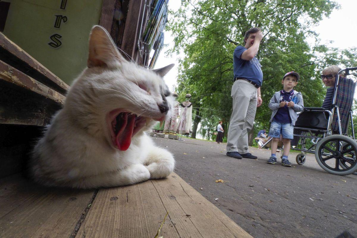 mačka, Moskva