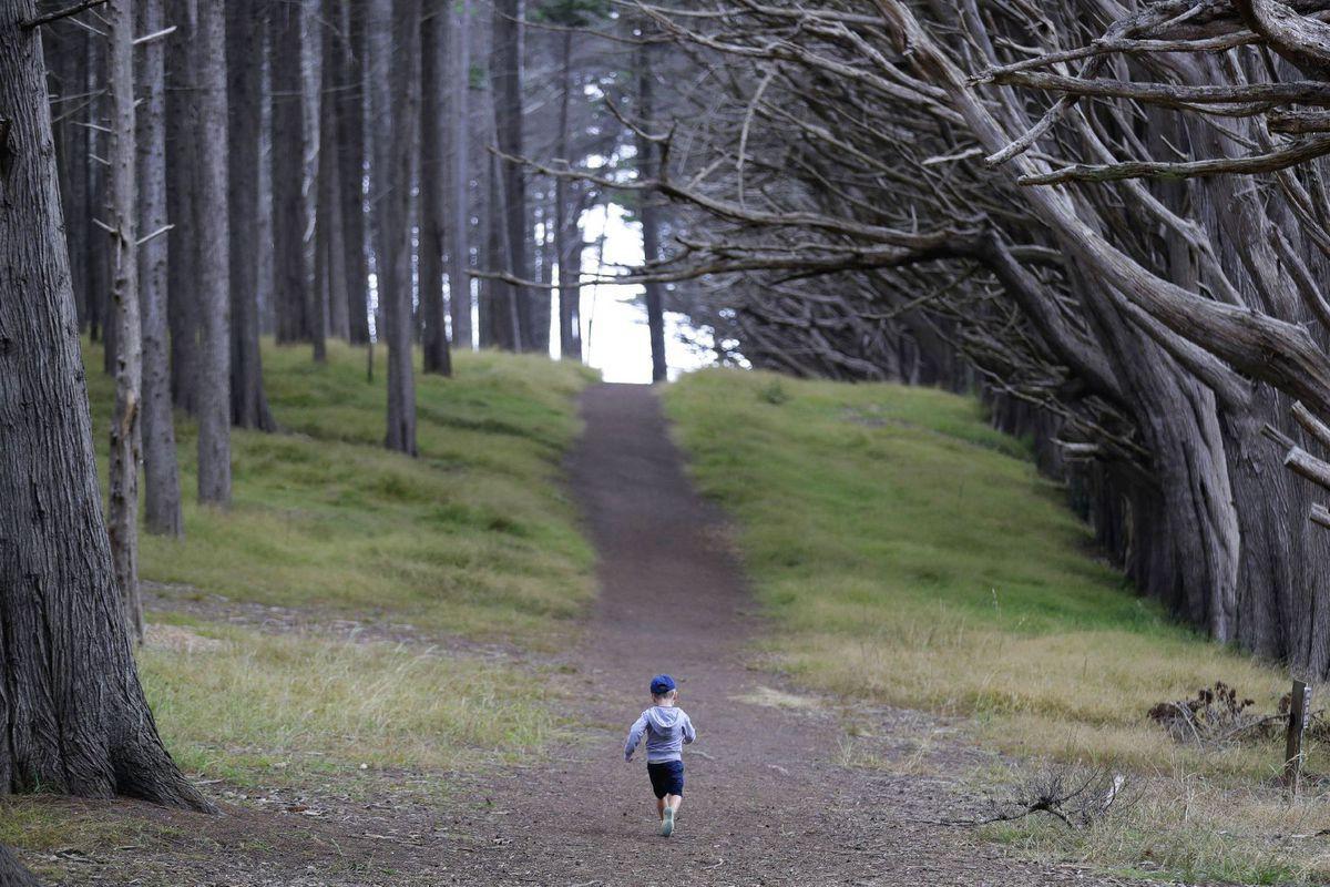 les, dieťa, park, stromy, prechádzka, Kalifornia