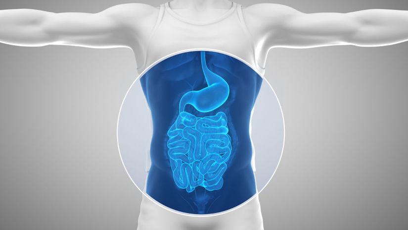 brucho, čerevá, žalúdok, trávenie