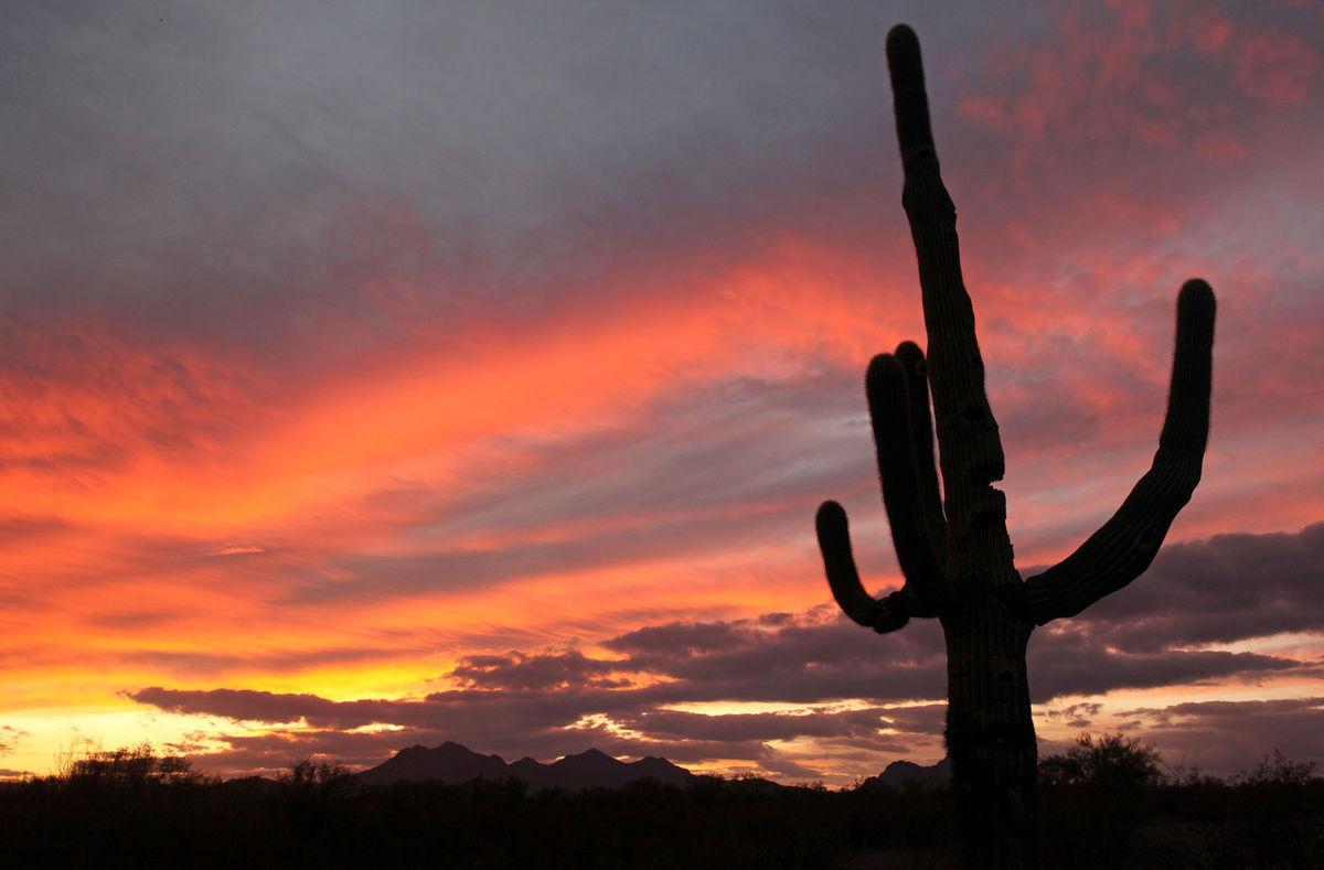 kaktus, púšť, večer, obloha