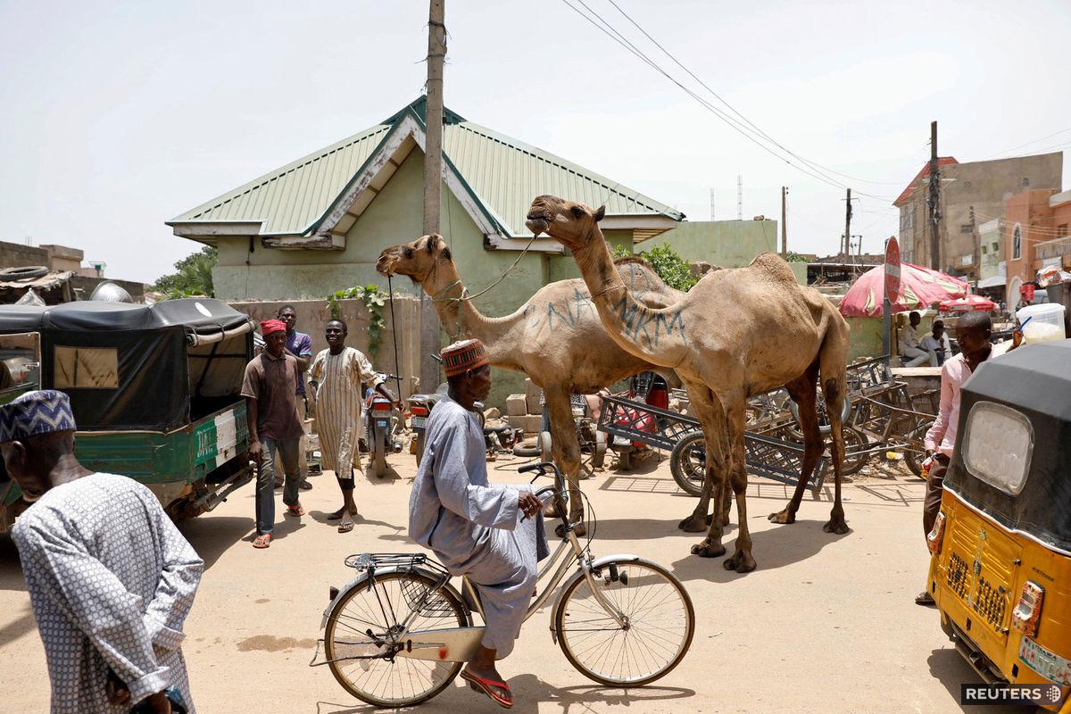 Nigéria, ťavy