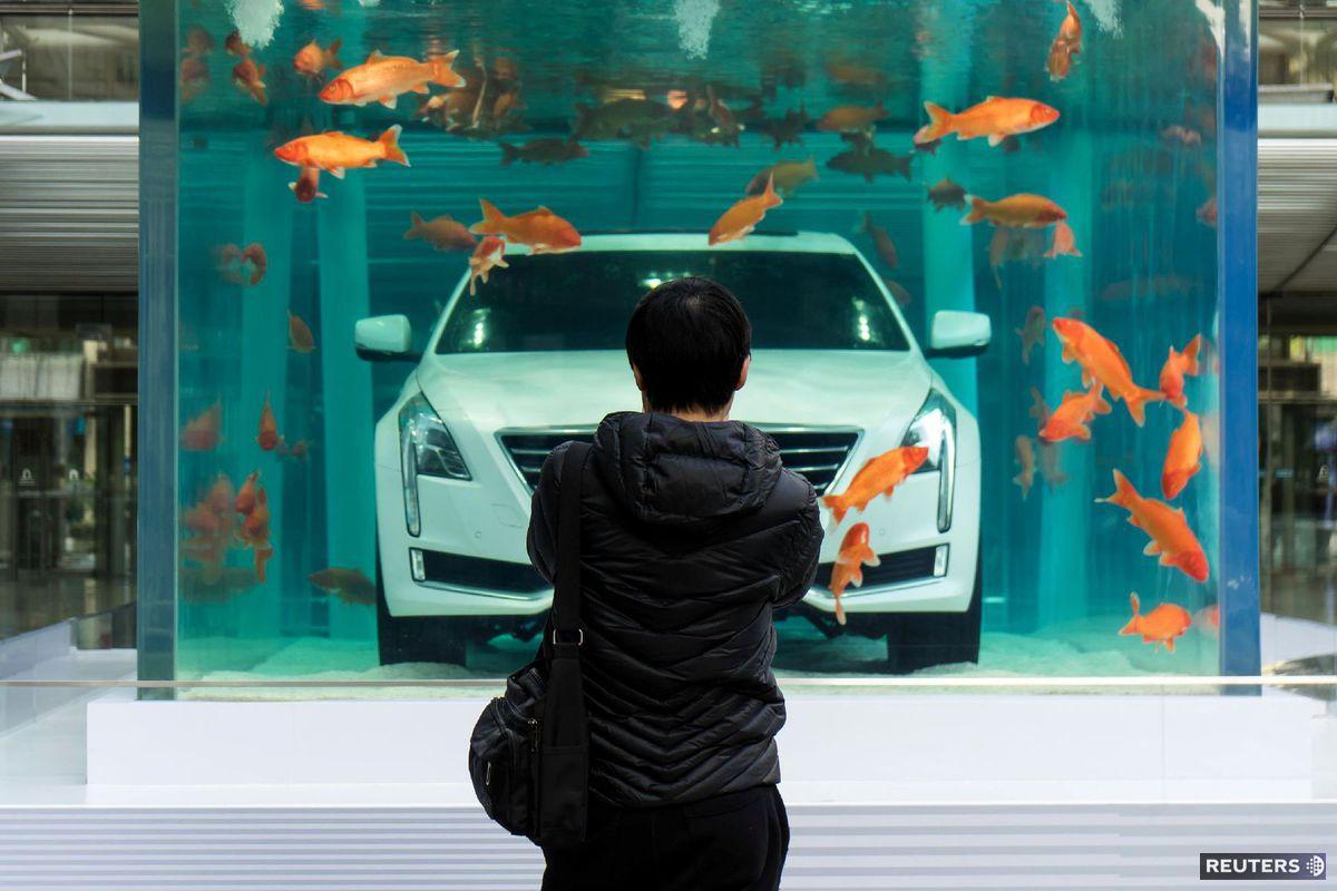 čína, auto, akvárium, rybky