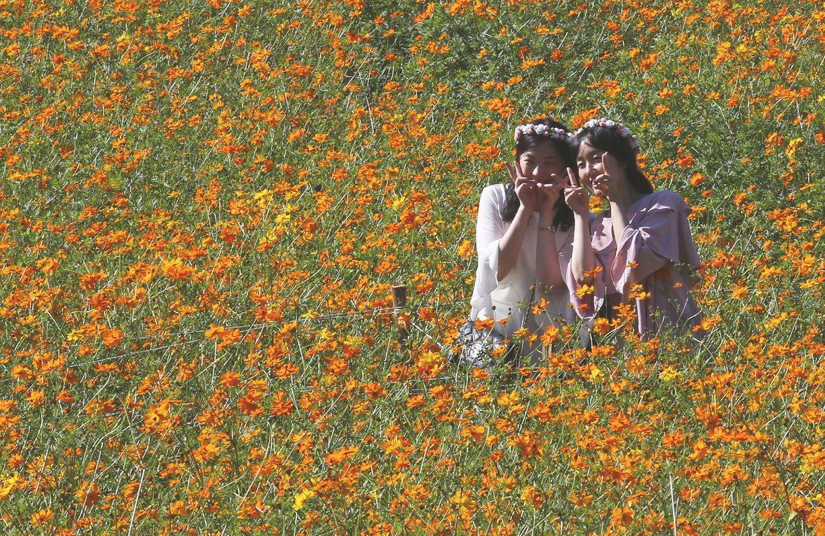 Južná Kórea, lúka, kvety, dievčatá, víly, Kórejky