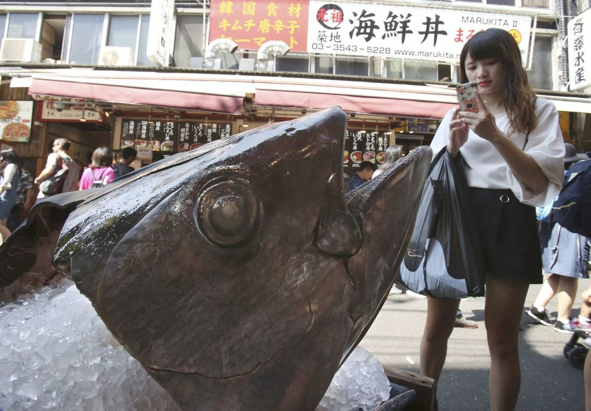 ryba, socha, hlava, tuniak
