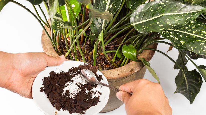 káva, hnojivo