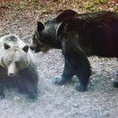 Medvede chcú svoje Tatry späť