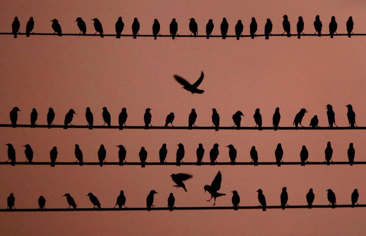 Kansas, vtáky, káble