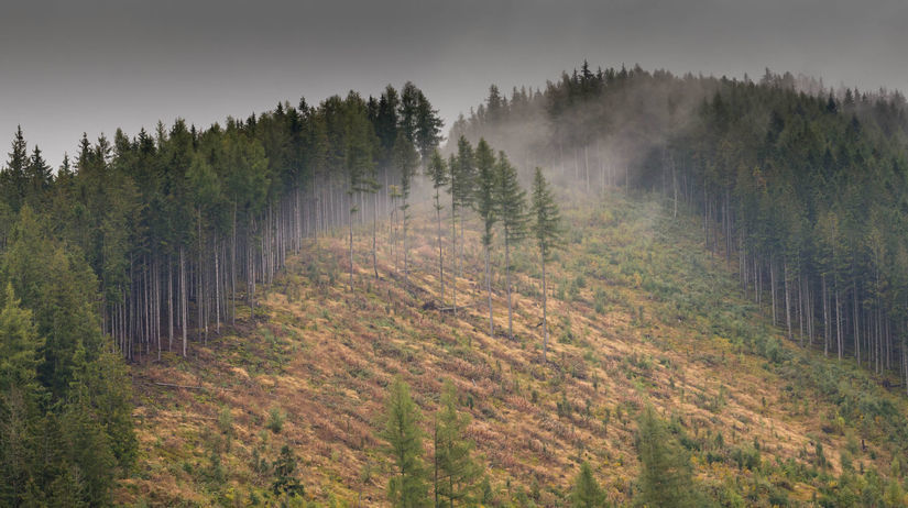 les, rúbanisko, Nízke Tatry