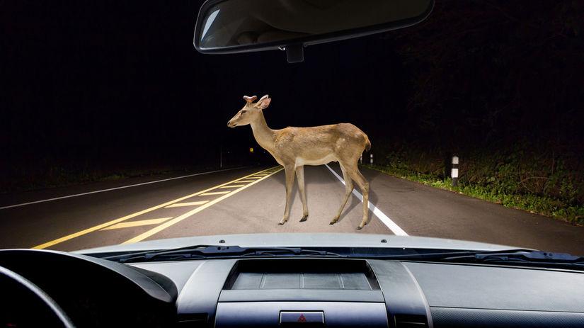 zviera, nehoda, auto, pzp