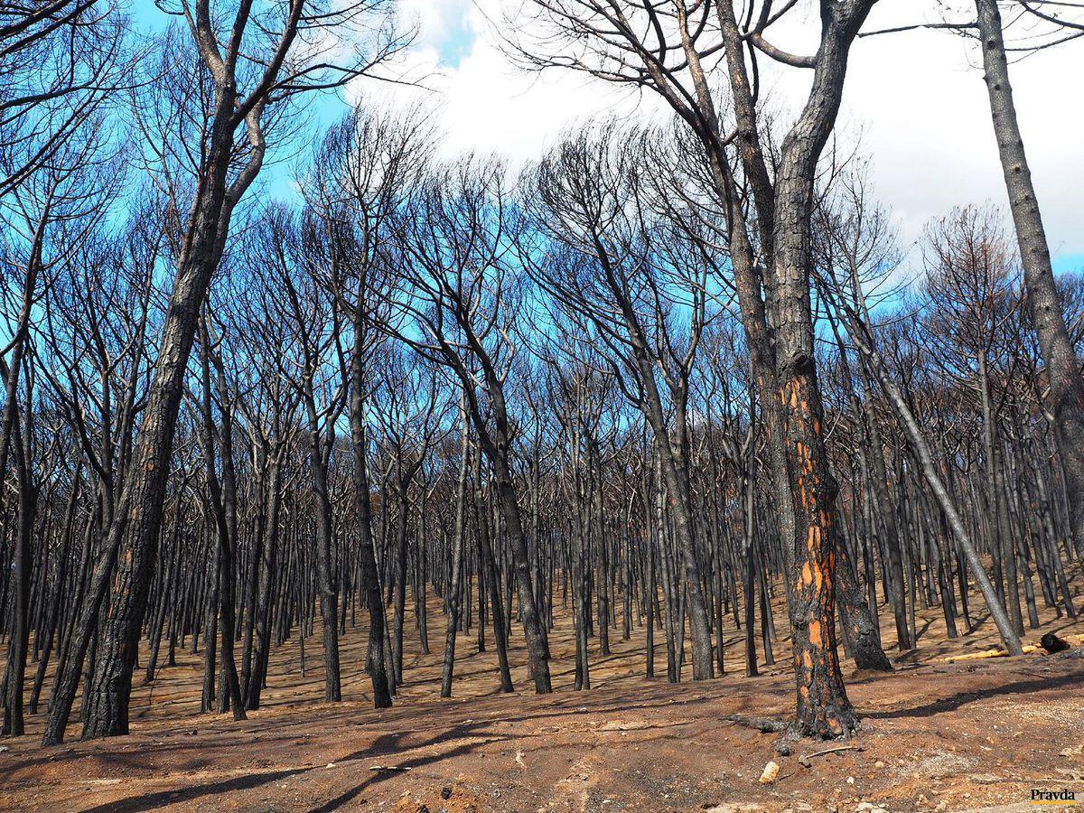 stromy, les, požiar, zhorenisko,