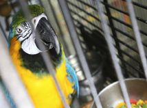 papagáj, exotika, zoo, vták