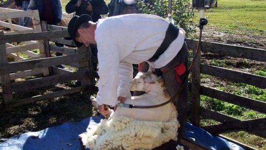 Náš tip: Ako pásli ovce valasi alebo Od Demetra mali pastieri dovolenku