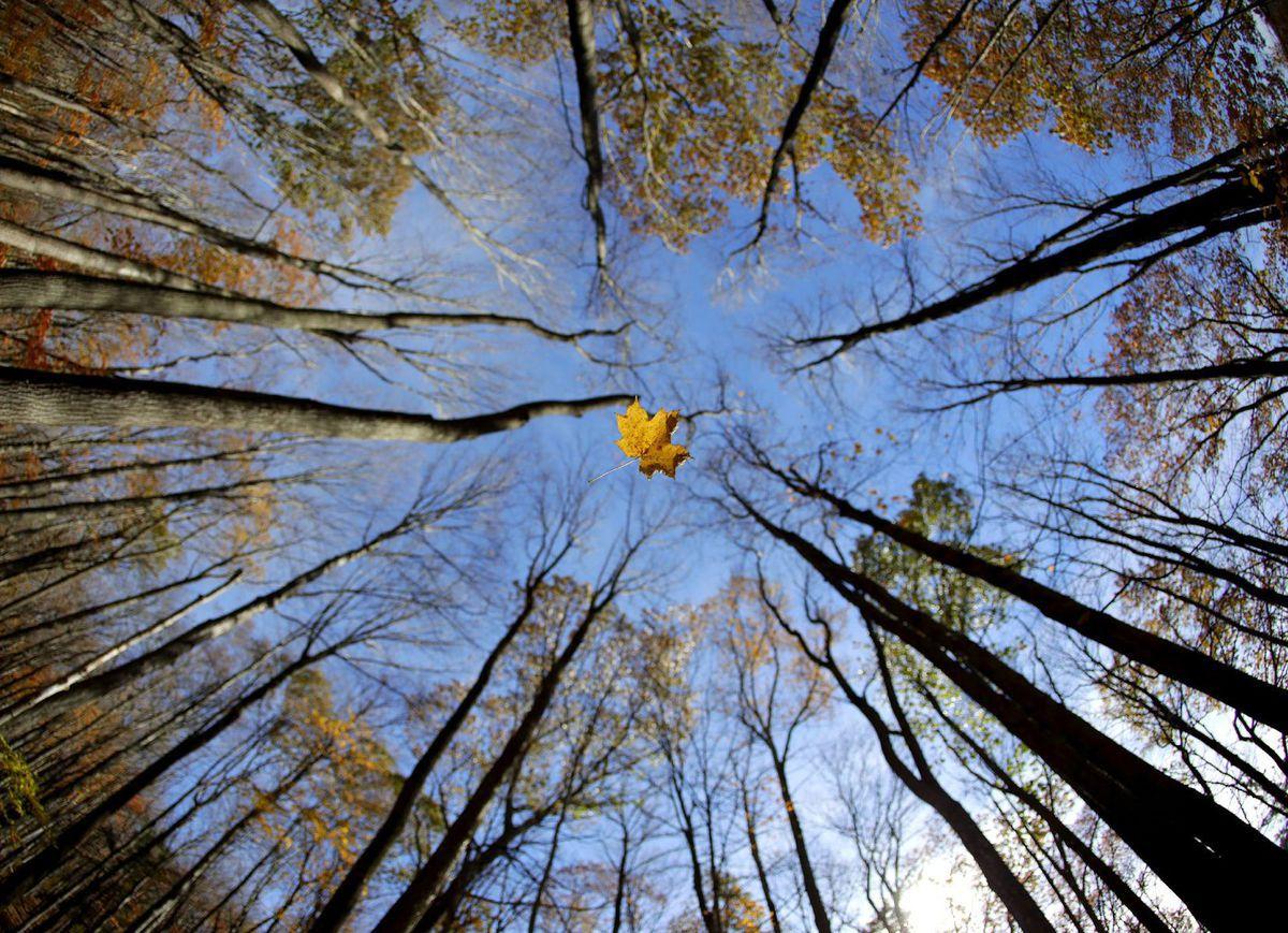 list, jeseň, stromy, les, New York Daily Life