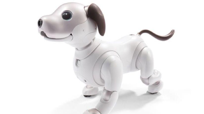 Aibo, domáci pes, umelá inteligencia, robotický...