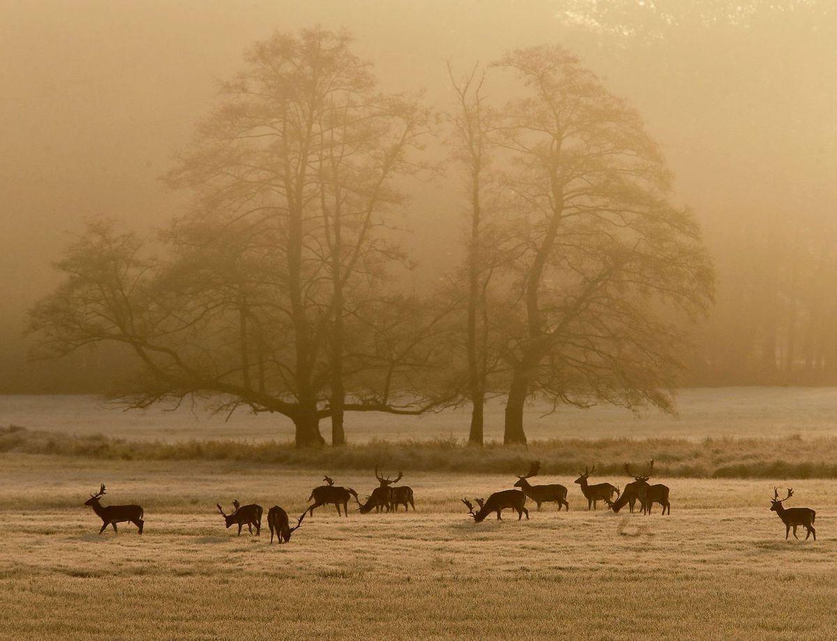 jelene, zima, zvieratá, zver