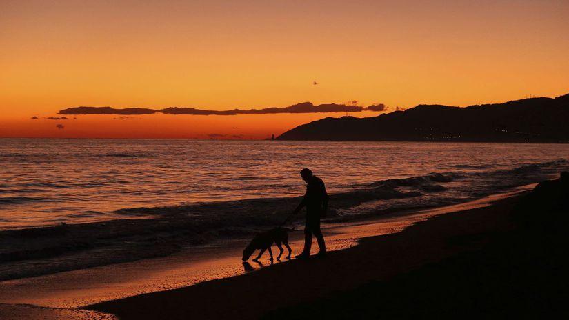 španielsko, more, pes, pláž, pes