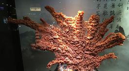 koral,