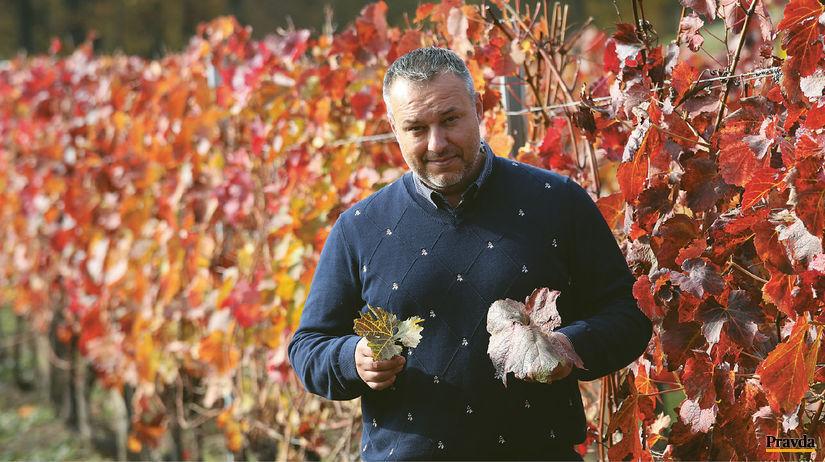 Martin Pomfy zbiera energiu vo vinohrade.