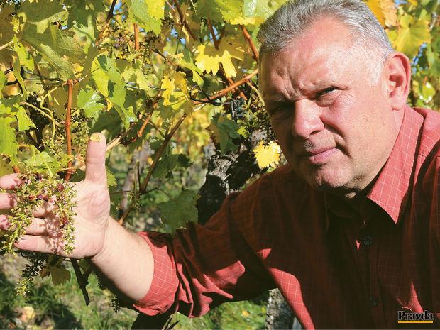 Obrázok Kombajn – symbol novej vinárskej éry